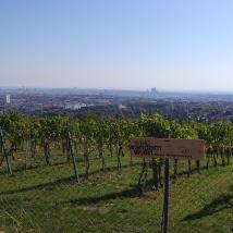 Les vignes viennoises