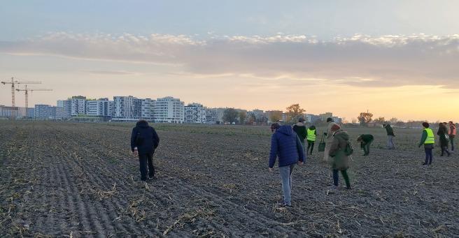 la battue dans un champ de la Seestadt